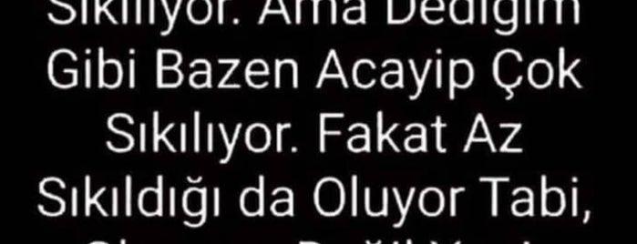 Koton Tunalı is one of Posti che sono piaciuti a No's🖤.