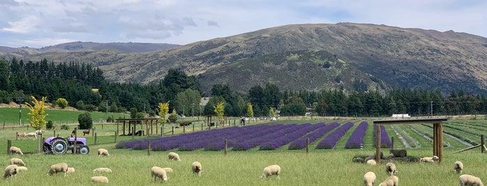 Wanaka Lavender Farm is one of Best of NZ - South Island.