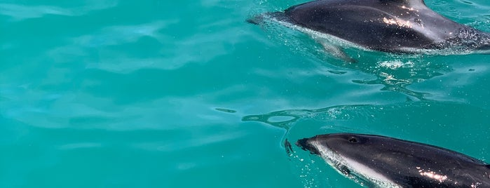 Dolphins Encounters is one of Best of NZ - South Island.