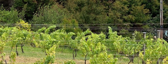 Kennedy Point Vineyard is one of A week on New Zealand's North Island.