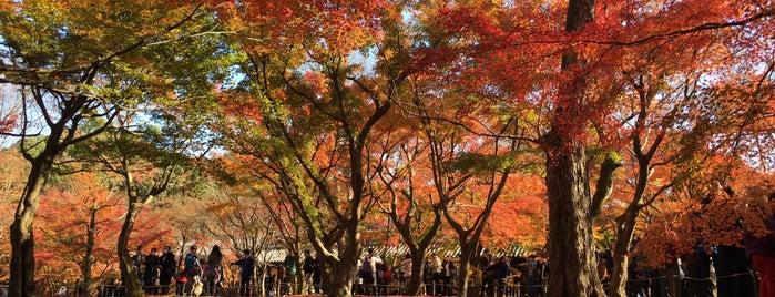 東福寺 is one of Kansai Trip.