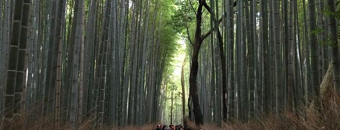 竹林の小径 is one of Kansai Trip.