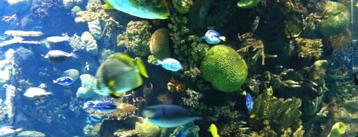 Discovery Reef is one of สถานที่ที่ Heidi ถูกใจ.