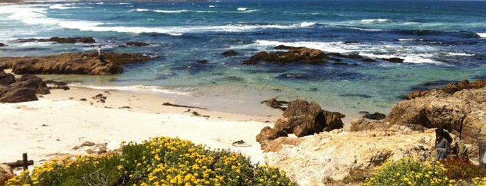 Asilomar State Beach is one of Stevenson Favorite US Beaches.