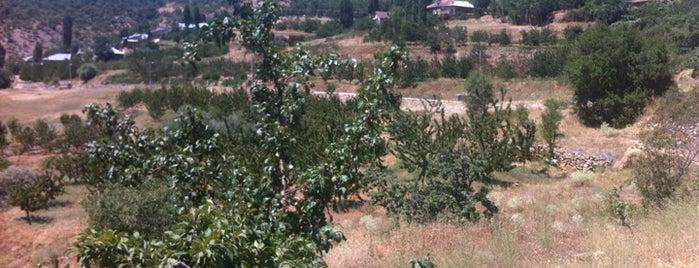 Hadim is one of Konya'nın İlçeleri.