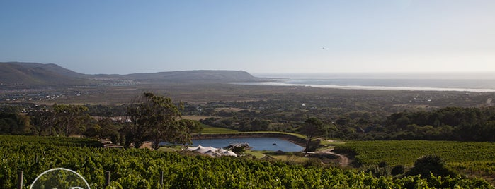 Cape Point Vineyards is one of SA.