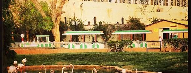 Riyadh Zoo is one of Riyadh - Parks.