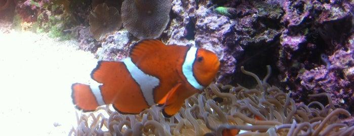 Shedd Aquarium is one of Chicago 2011.