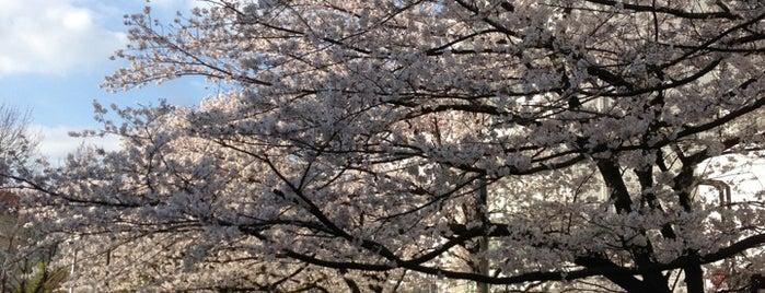 Tsukijigawa Park is one of Tokyo 🌙.