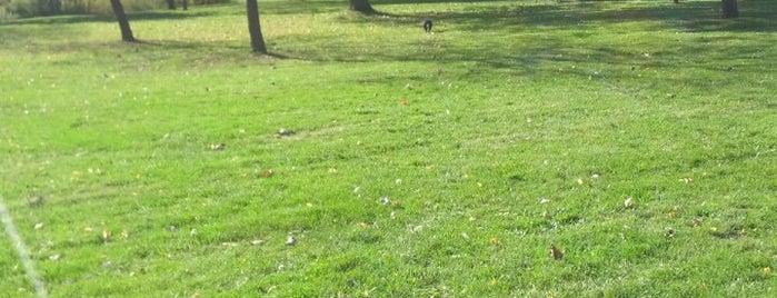 Martin Goodman Trail Dog Park is one of Posti che sono piaciuti a Ethan.