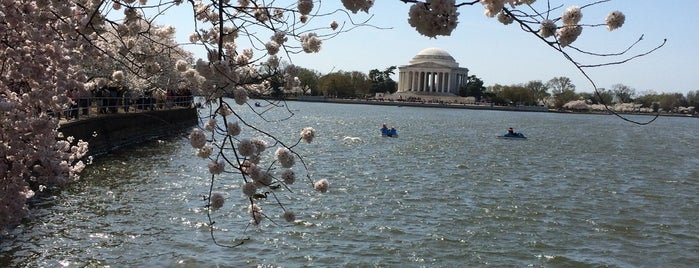 National Cherry Blossom Festival is one of 111 Places Tips.