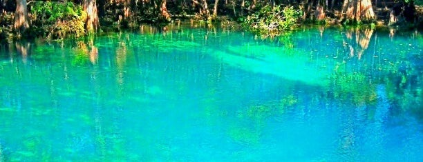 Manatee Springs State Park is one of 2019.