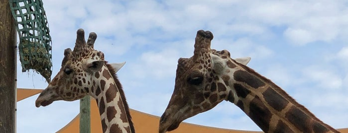 Giraffes At Naples Zoo is one of Orte, die Michael gefallen.