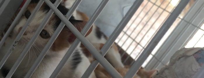 Sociedade Protetora dos Animais is one of Escola de Ciências Agrárias e Medicina Veterinária.