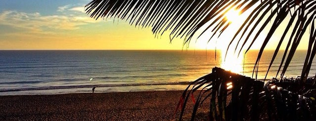 Loggerhead Beach is one of Stephen Beach & Nature Spots.