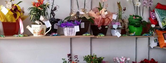 Flor e Arte Floricultura is one of CWB - Floriculturas.