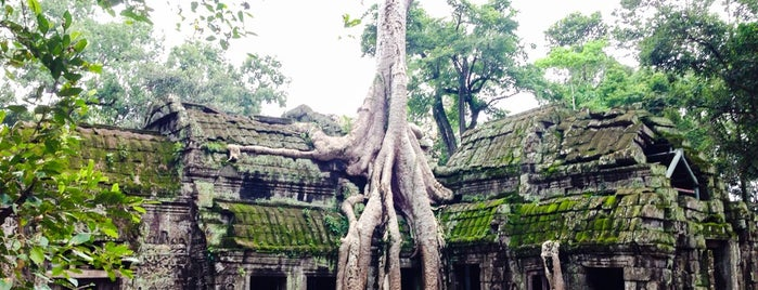 Ta Prohm ប្រាសាទតាព្រហ្ម is one of Angkor Archaeological Park Highlights.
