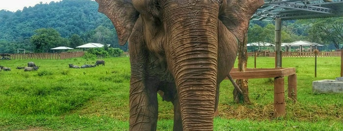 Elephant Nature Park is one of Chiang Mai.