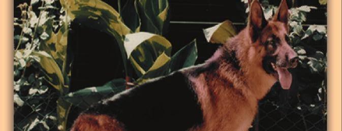 Greendog Köpek Eğitim Üretim Bakım Pansiyon Satış is one of Burcu 님이 좋아한 장소.