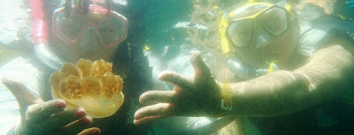Jellyfish Lake is one of Before you die.