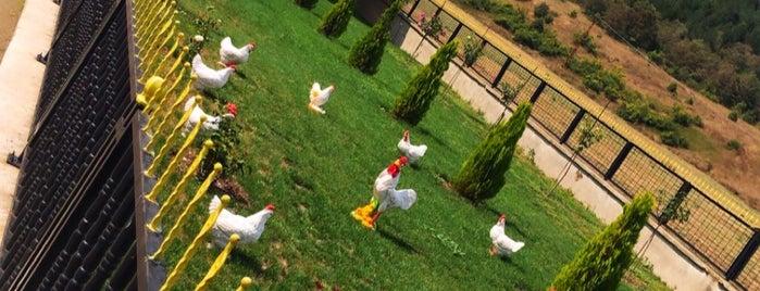 Üreten Tavuk  Çiftliği is one of Özdemir'in Beğendiği Mekanlar.