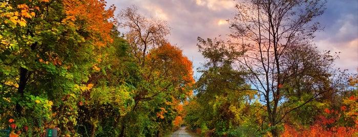 Radnor Trail is one of สถานที่ที่ Dennis ถูกใจ.