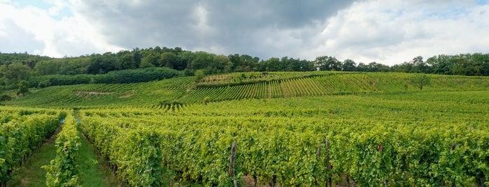 Hunawihr is one of Les plus beaux villages de France.