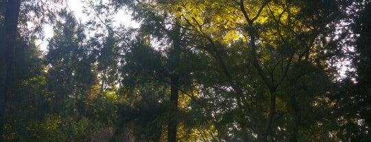 Paseo del Jardin de la Roca is one of Belen Marisol 님이 저장한 장소.