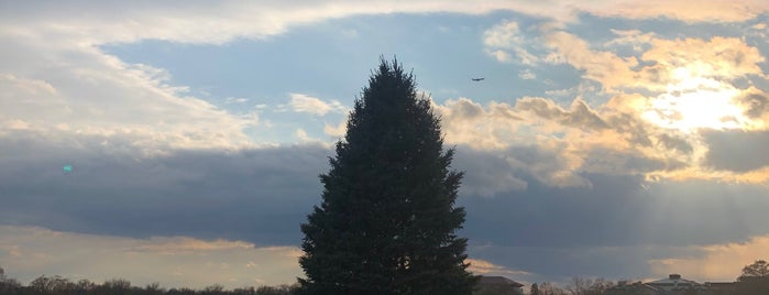 National Christmas Tree is one of 111 Places Tips.