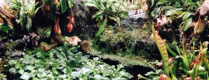 The Apothecaries' Garden is one of Nata'nın Beğendiği Mekanlar.