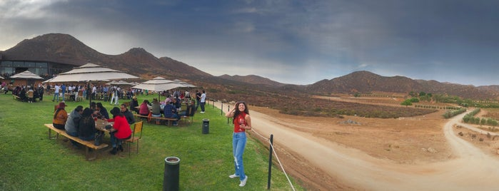 Decantos vinícola is one of Valle de Guadalupe.