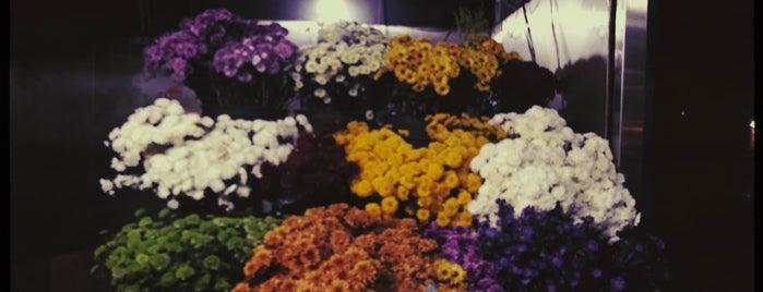 Flores De La Esquina is one of Best of Mexico City.