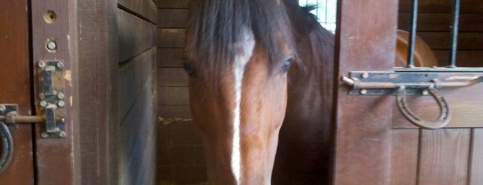 Foxcroft Farm Equestrian Center is one of Elenaさんのお気に入りスポット.