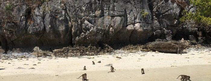 Phi Phi Ley Monkey Beach is one of Lugares favoritos de Ladybug.