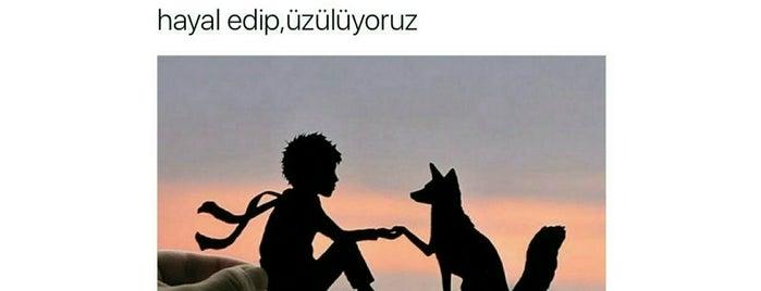 Derya Home... is one of Gezdim gördüm.
