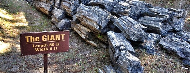 The Petrified Forest is one of Outdoor Adventures.