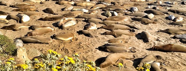 Piedras Blancas Elephant Seal Rookery is one of USA Trip 2013 - The West.