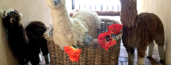 Australian Alpaca Centre is one of Southern Highlands Day Trip.
