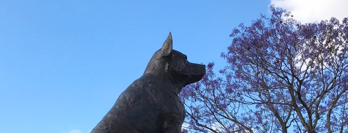 Blue Heeler Statue is one of Big Things.