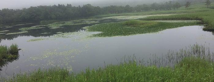 知床五湖 一湖 is one of สถานที่ที่ ジャック ถูกใจ.