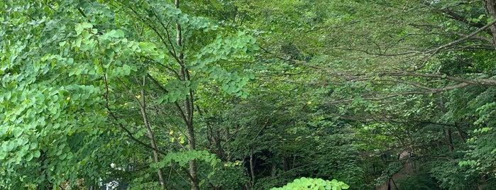 東京都檜原都民の森 is one of ジャックさんのお気に入りスポット.