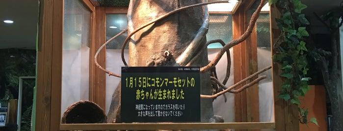 王国温泉 カピバラの湯 is one of Lugares favoritos de ジャック.