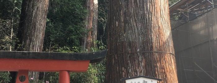 御神木 is one of Lugares favoritos de ジャック.