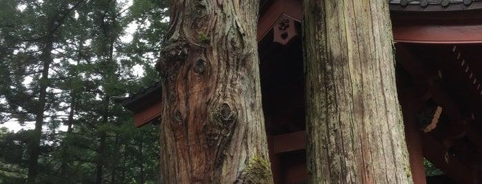 二荒山神社 夫婦杉 is one of Posti che sono piaciuti a ジャック.