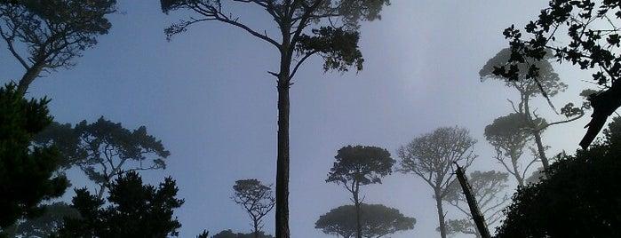 George Washington Park is one of HWY1: Santa Cruz to Monterey/Carmel.