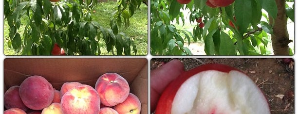 Huber's Orchard, Winery, & Vineyards is one of Excellent Farms for Apple Picking.