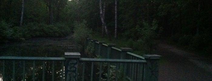 Бег В Лесотехническом Парке is one of Шурик: сохраненные места.