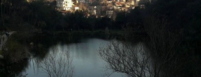 Atatürk Kent Ormanı is one of Posti che sono piaciuti a Mujdat.