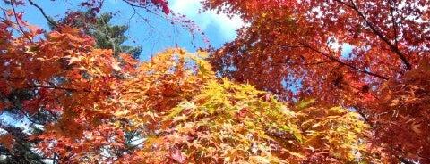 紅葉谷公園 is one of Japan/Other.