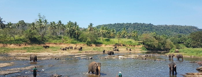 Elephants' Bath is one of Galip Koray: сохраненные места.